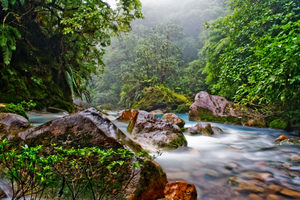 p-8142-Andes-Jungle.jpg